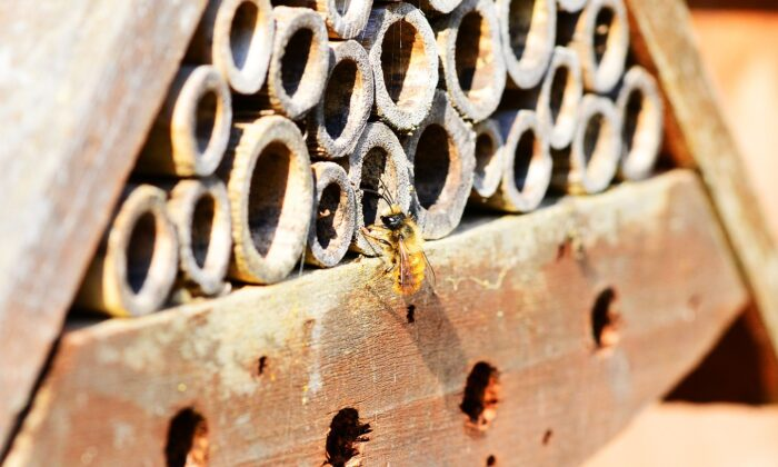File photo of a solitary bee entering a bee hotel made of bamboo canes. The Horniman Museum and Gardens in South London has created a new display to attract solitary bees to its gardens. (PollyDot/Pixabay)