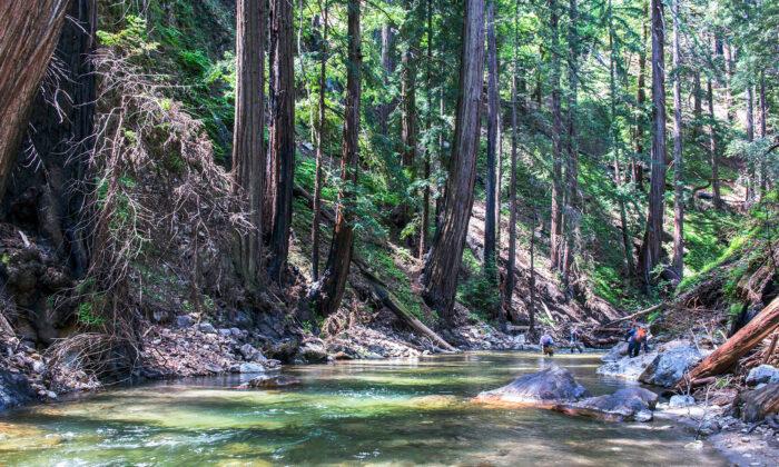 (Doug Steakley/Western Rivers Conservancy via AP)
