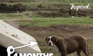 Incredible Rescue Of Mama Dog After Trying For 4 Months