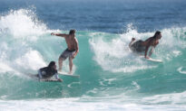 Western Aussie Surfer Survives After Shark Takes 'Chunks' Out His Leg
