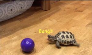 Funniest Turtles Ever