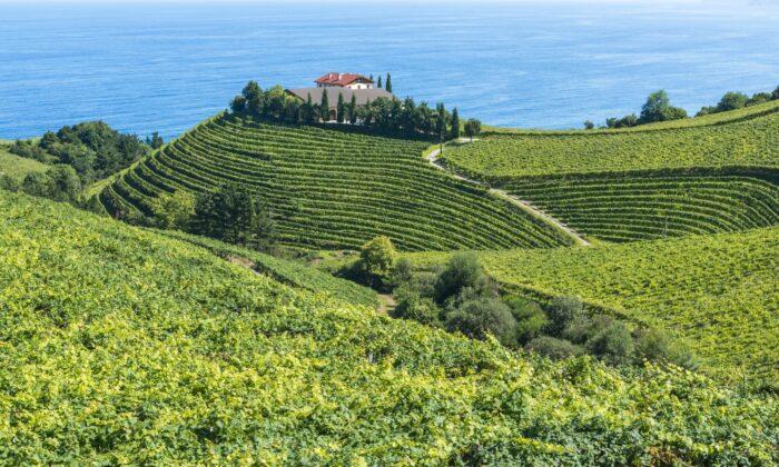 Storied txakoli producer Txomin Etxaniz's vineyards and winery in Getaria, a historic fishing village in Basque Country, Spain. (Alberto Loyo/Shutterstock)