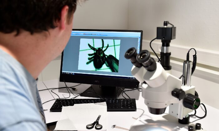 A person observes a tick in the microscope in the laboratory of the Institut National de la Recherche Agronomique (Jean-Christophe Verhaegen/AFP via Getty Images)