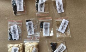 USDA Investigation Reveals 14 Varieties in Unsolicited Seeds Mailed From China
