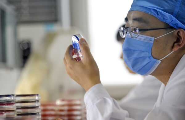 A Chinese doctor checks a bacteria sampl