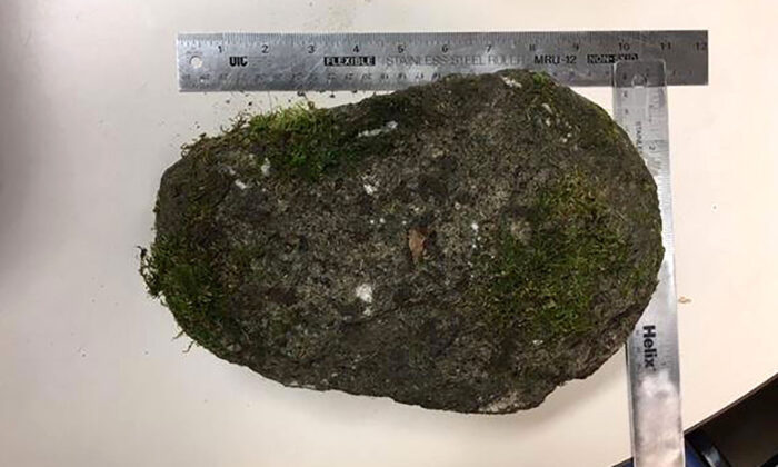 A nearly 10 pound rock that police say was thrown at officers during overnight protests that began Aug. 15, 2020. (Portland Police Bureau)