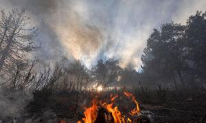 Neighbors Help Each Other Amid Apple Fire Destruction
