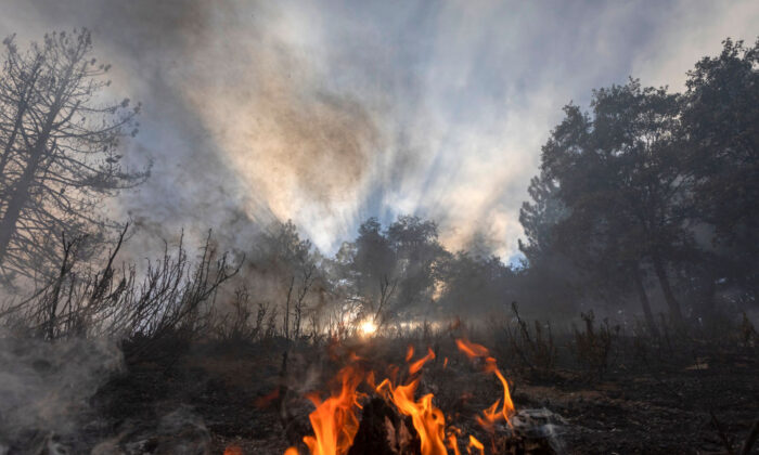 Flames creep through a forest understory at the Apple Fire in Cherry Valley, Calif., on Aug. 1, 2020. (David McNew/Getty Images)
