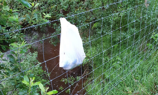 'Heartless': Newborn Puppies Abandoned in Plastic Bag Hung on Barbwire Fence Get Rescued