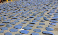 1,400 Turtle Shell Pieces From Endangered Sea Turtles Seized in Illegal Trafficking Shipment