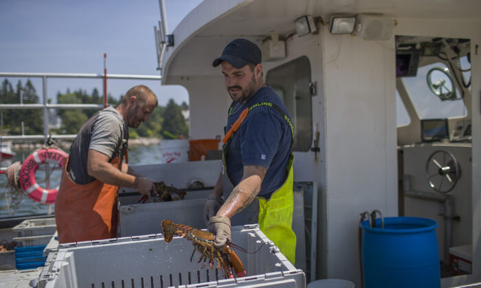 Lobstermen unload lobsters caught in the Gulf of Maine at the Stonington Lobster Co-Op wharf in Stonington, Maine, on July 5, 2019. (Joe Raedle/Getty Images)