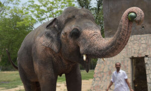 World's 'Loneliest Elephant' Chained for 35 Years Is Finally Moving to a New Home