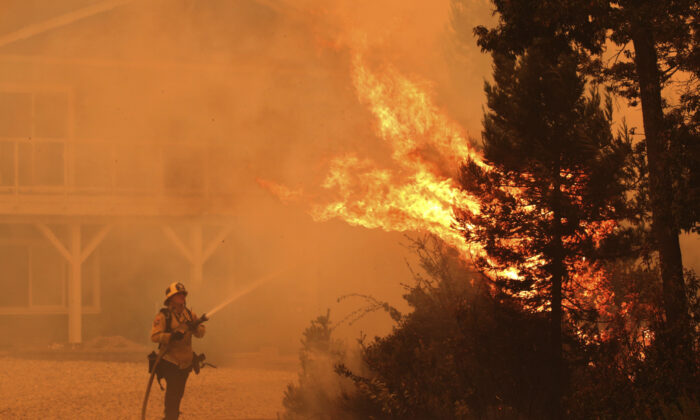 Firefighter David Widaman directs water onto a tree that had exploded in flames as a fire crew defends a house northwest of Santa Cruz, Calif., on Aug. 19, 2020. (Shmuel Thaler/The Santa Cruz Sentinel via AP)