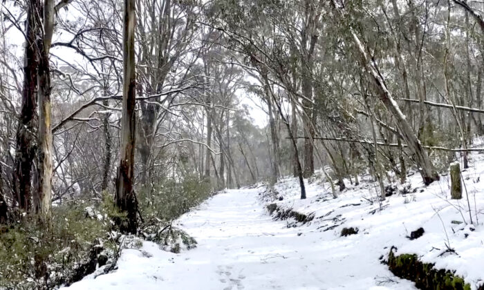 A view shows a snow-covered road in Oberon, New South Wales, Australia on Aug. 22, 2020, in this still image obtained from social media video. (Tracey Johns via Reuters)