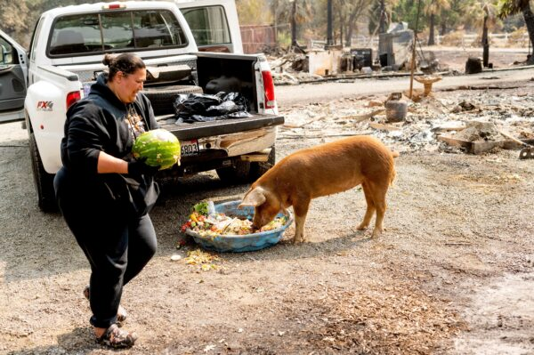 Gina Souza feeds her neighbor's pigs