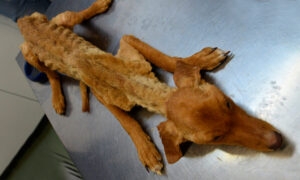 'Indisputable Neglect': Dozens of Severely Malnourished Dogs Rescued From Spanish Farm