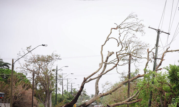 A fallen tree is seen laying across a street after the passing of Cyclone Yasi on February 3, 2011 in Townsville, Australia. (Ian Hitchcock/Getty Images)
