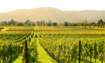 Wine Talk: California Wine Country, a Paradise Lost