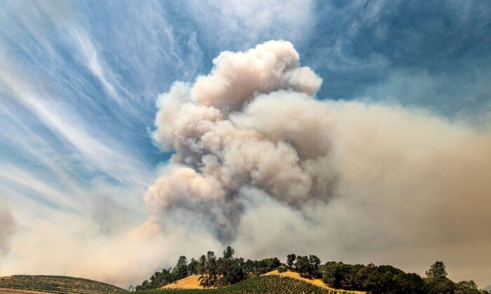 A plume rises over a vineyard in unincorporated Napa County, Calif., on Aug. 18, 2020. (Noah Berger/AP Photo)
