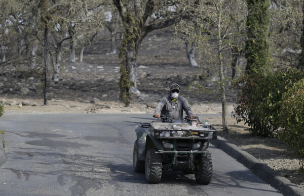 A vineyard worker rides an ATV to make a repair on a wildfire-burned irrigation pipe