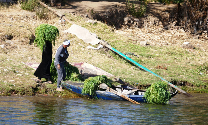 Farmers harvest their crops along the Nile River in Egypt. (Courtesy of Phil Allen)