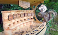 Man Builds a Backyard Squirrel Bar With Seven Varieties of Nuts on Tap
