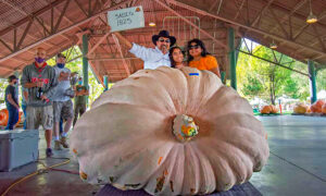 Giant Pumpkins Break Utah State Record at Annual Thanksgiving Point Weigh-Off
