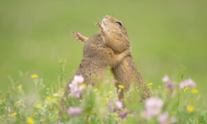 Photographer Captures a Sweet Image of Two Adorable Squirrels Sharing a Hearty Hug