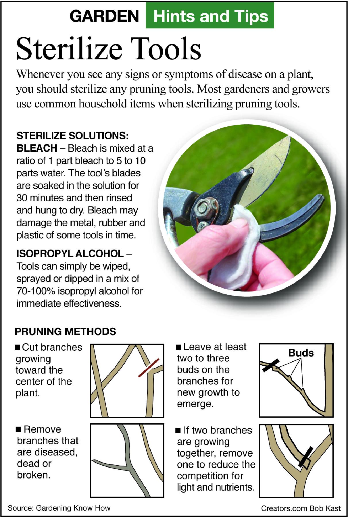 sterilizing tools infographic