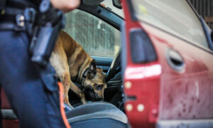'Good Boy!' Florida K9 Officer Sniffs Out 907 MDMA 'Ecstasy' Pills During Traffic Stop