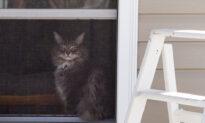 It Isn't Difficult to Fix Your Own Window/Door Screens