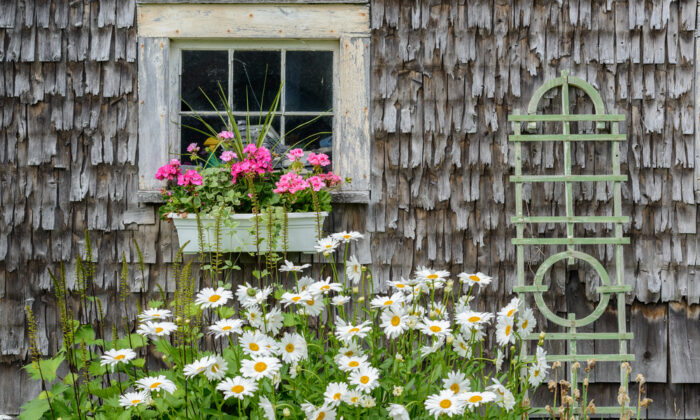 Flowers grace the side of a restored barn on the Maine coast. (Jorge Moro/Shutterstock)