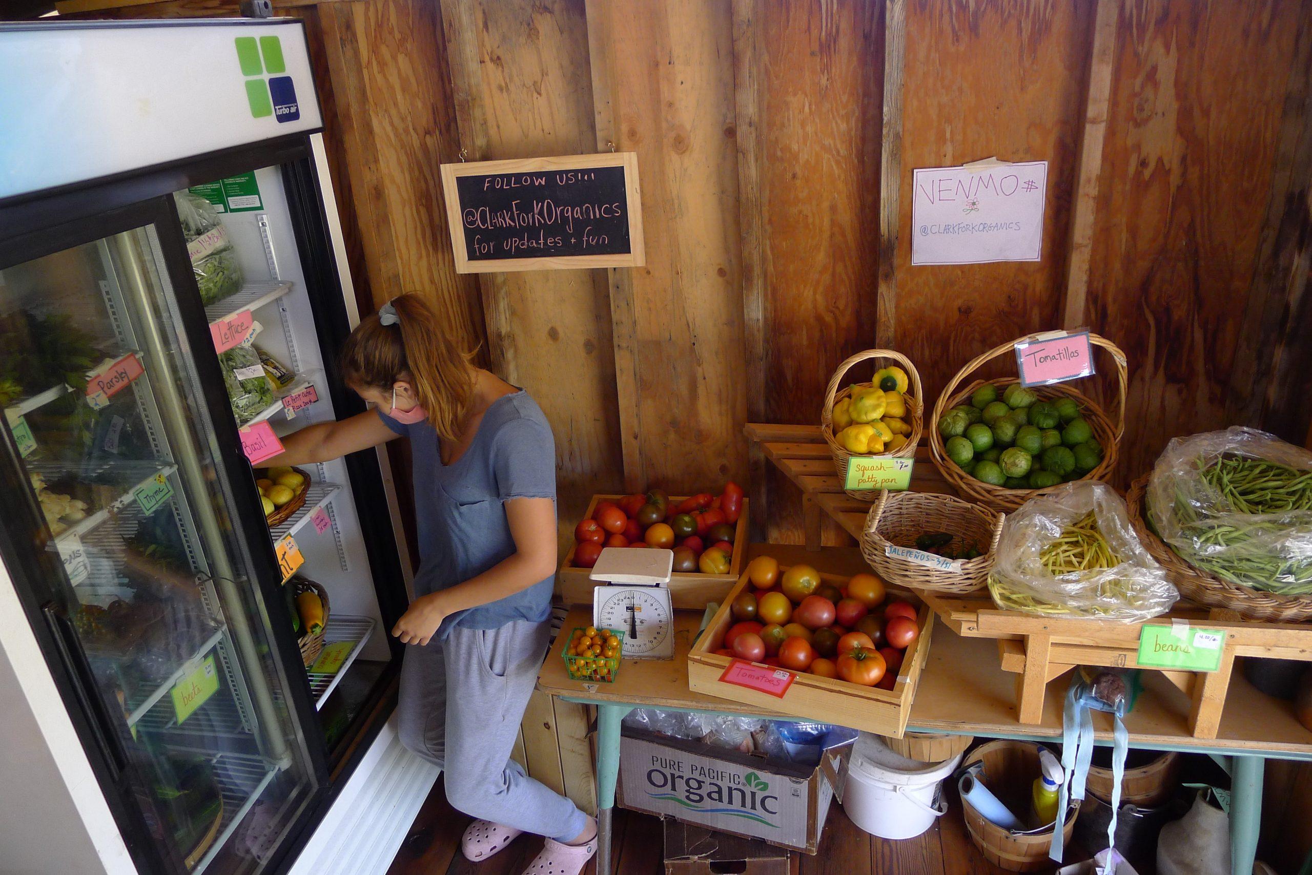 inside clark fork organics farm stand