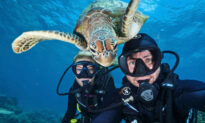 5 of the Funniest Animal Photobombs That Will Brighten Your Day
