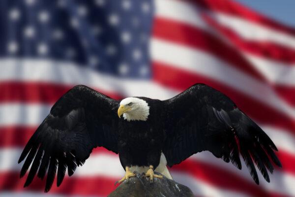 Bald Eagle with Flag United States of America