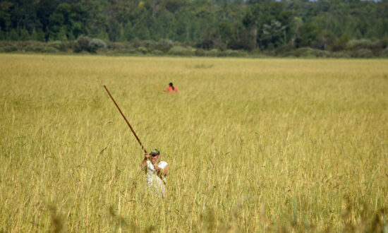 Of Wild Rice and Men