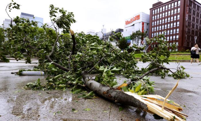 A broken tree lies down after typhoon hit Fukuoka, southwestern Japan on Sept. 7, 2020. (Kyodo News via AP)