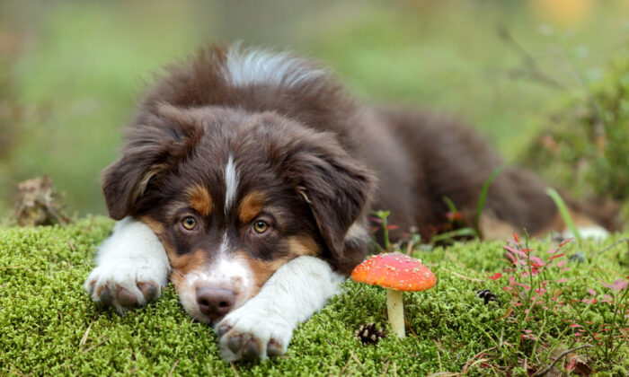 "Teach your dogs to ""drop it"" and ""leave it"" in case they discover a mushroom before you do. (Ivanova N/Shutterstock)"