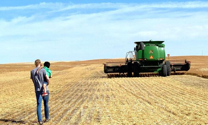 Roman Burlando (17) carries his little brother Rayden toward the combine harvester. Harvest time involves the whole family. (Carla Burlando)