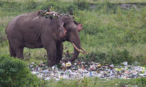 Tragic Photos Show an Elephant Wading Through a Pile of Plastic Trash in Search for Food