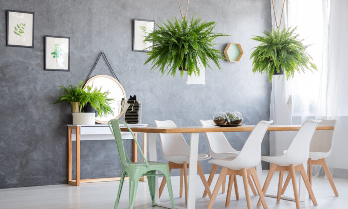 For an easy makeover, add plants for color and serenity.  (Photographee.eu/Shutterstock)