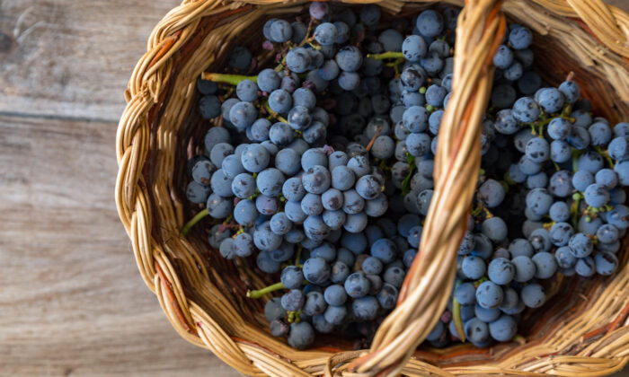 Australian government is looking into why China has delayed importing Australian table grapes for up to 20 days. (Giulia Scarpaleggia)