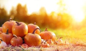 Growing Pumpkins