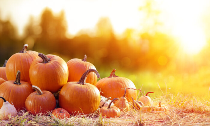Once harvested, store pumpkins in a cool place. (Romolo Tavani/Shutterstock)