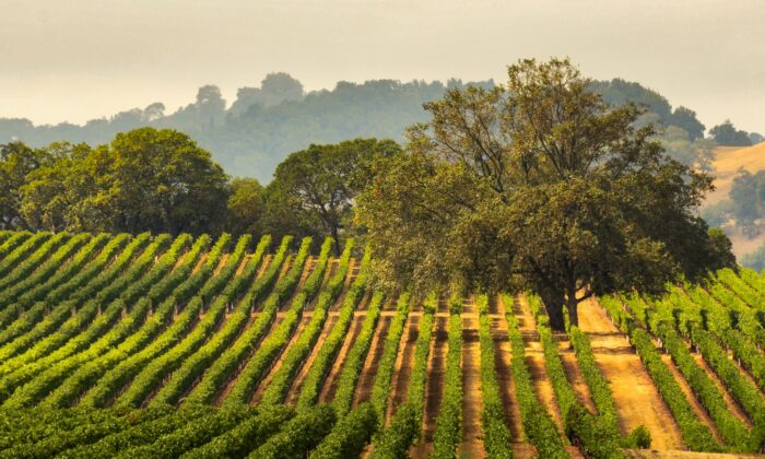 What happens in Napa and Sonoma doesn't even begin to depict the overall goodness, or not, of any particular vintage. (Gary Saxe/Shutterstock)