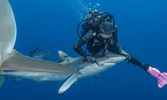 Female Diver Removes Fishing Hook Stuck in Shark's Mouth: 'It's Such an Amazing Feeling'