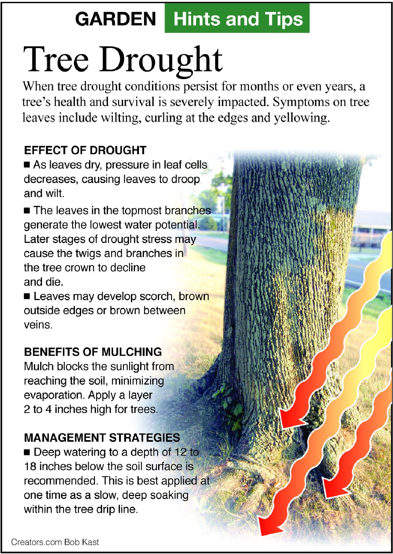 tree drought
