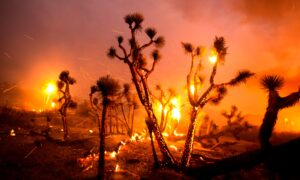 Homes Destroyed After Winds Push California Fire Into Desert