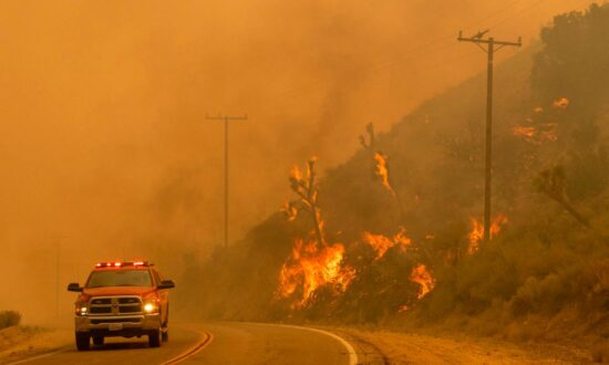 California Stuck in 'Vicious Cycle' of Wildfires, Says Policy Expert