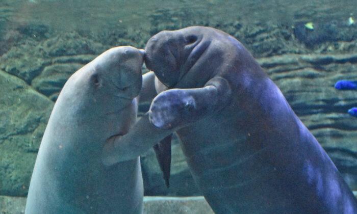 (Cincinnati Zoo & Botanical Garden)
